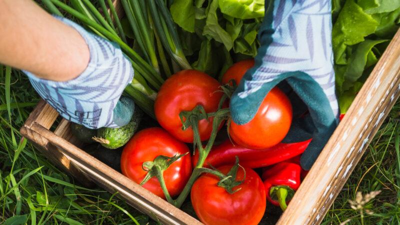Taking foods on basket made easier